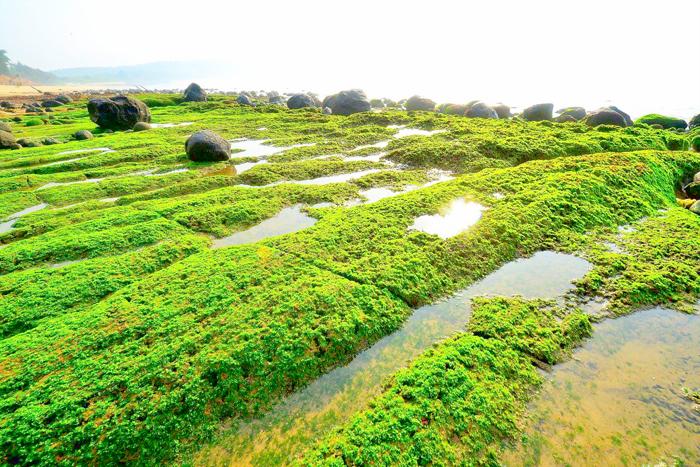 烈嶼鄉公所於春季推出「綠色岐跡‧綠石槽電瓶車專線」,遊歷青岐海岸的綠石槽等美景。(烈嶼鄉公所提供)