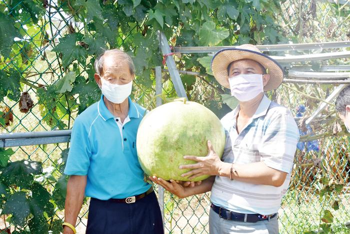 農友李得城栽植了逾三十斤的大瓠瓜,碩大的果實非常有存在感。(詹宗翰攝)